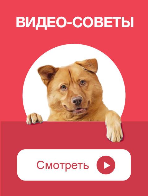 если собаку кастрировать будет ли он метить