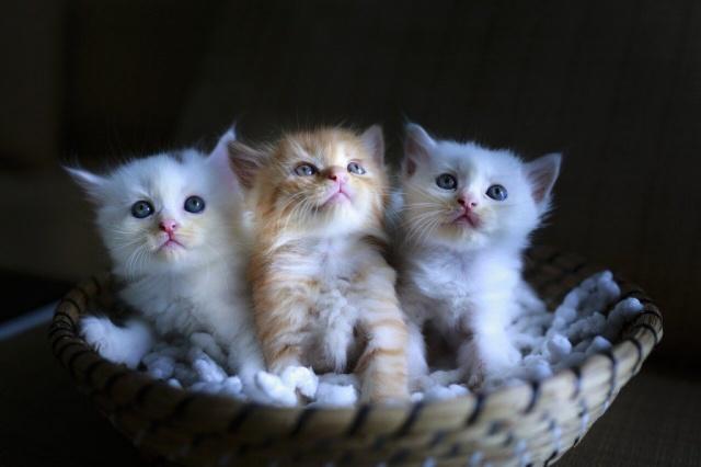 витамины для улучшения состояния шерсти для котят