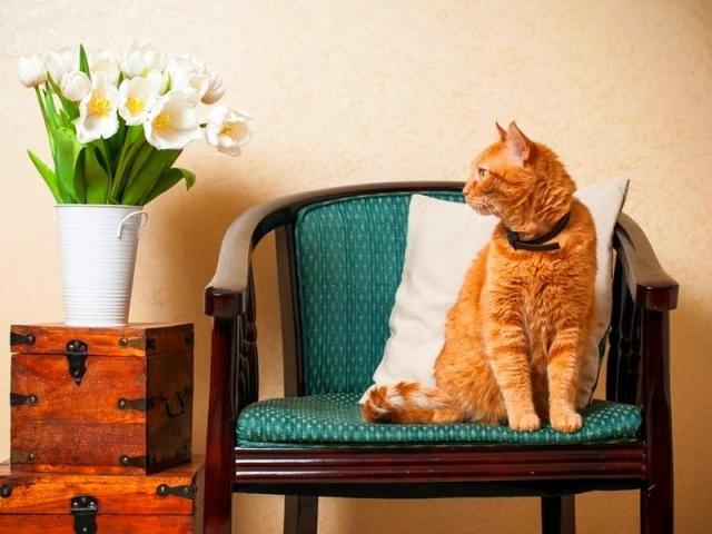 Красивая шерсть у кошек: как добиться