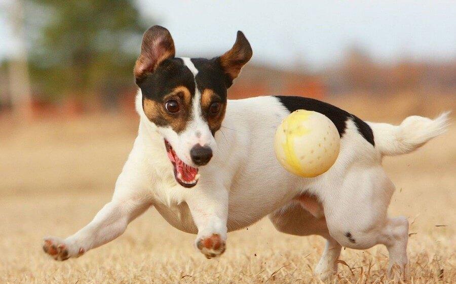 Советы по уходу за собакой от зоомагазина в Воронеже