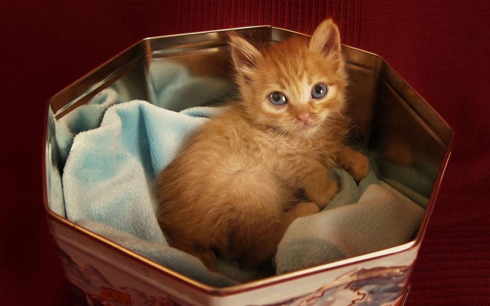 Купание котенка Расти