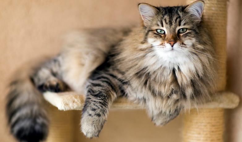 убрать колтуны у кота на дому