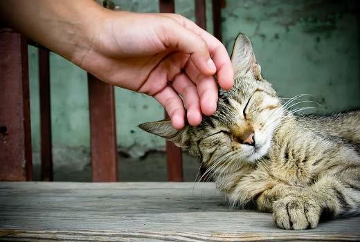 Как успокоить кошку